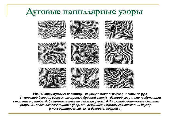 полу- типы папиллярных узоров пальцев рук картинки элементы