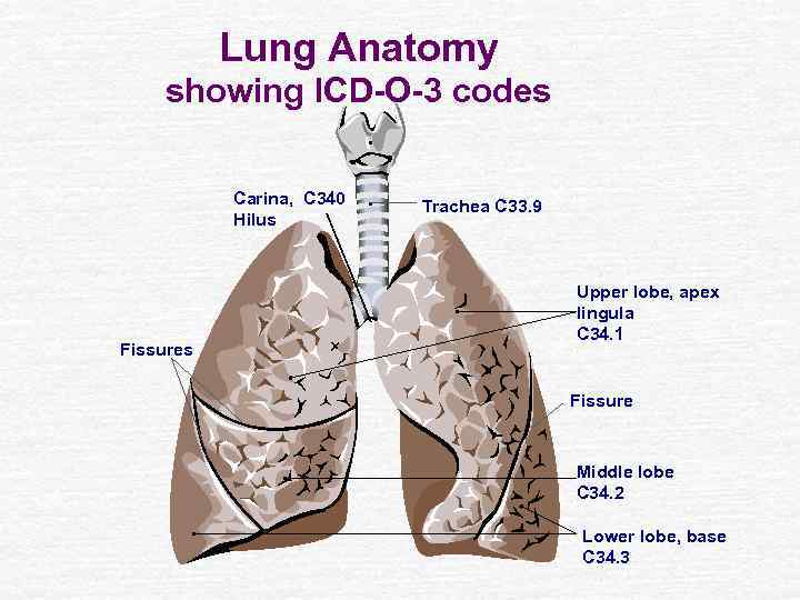 Lung Cancer Dr Yousef Noaimat Md Fccp Consultant