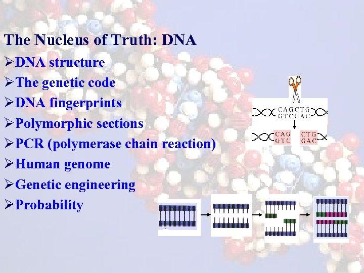 The Nucleus of Truth: DNA ØDNA structure ØThe genetic code ØDNA fingerprints ØPolymorphic sections