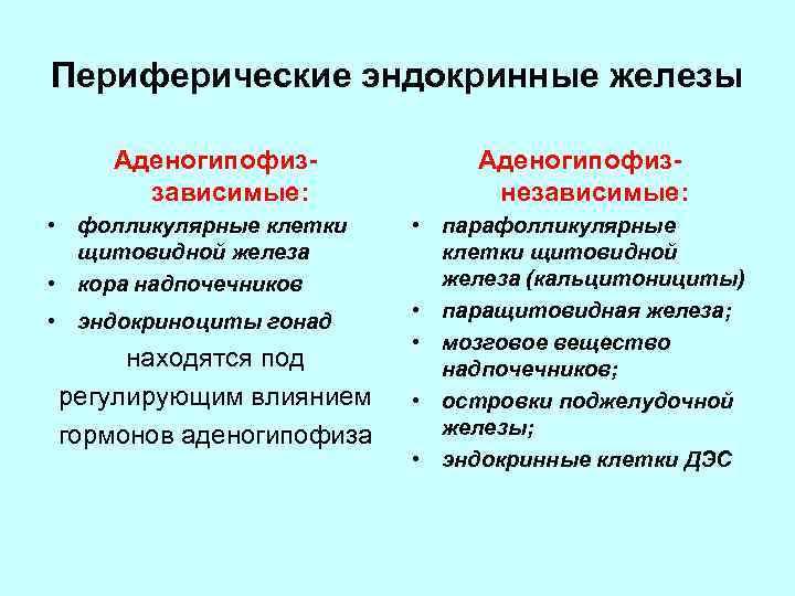 Периферические эндокринные железы Аденогипофиззависимые: • фолликулярные клетки щитовидной железа • кора надпочечников • эндокриноциты