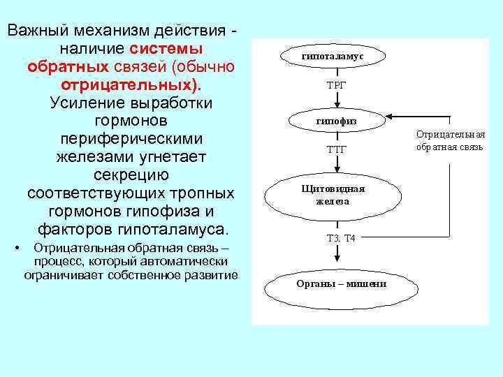 Важный механизм действия наличие системы обратных связей (обычно отрицательных). Усиление выработки гормонов периферическими железами