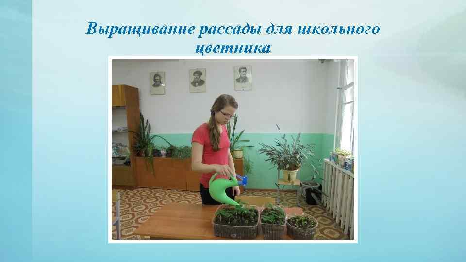 Выращивание рассады для школьного цветника