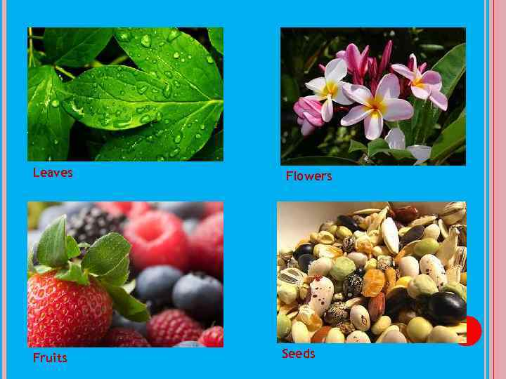 Leaves Fruits Flowers Seeds