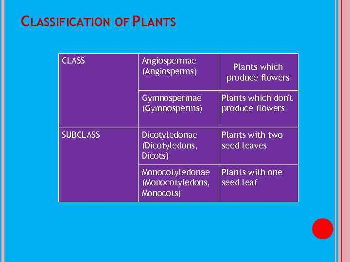 CLASSIFICATION OF PLANTS CLASS Angiospermae (Angiosperms) Plants which produce flowers Gymnospermae (Gymnosperms) SUBCLASS Plants
