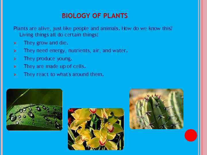 BIOLOGY OF PLANTS Plants are alive, just like people and animals. How do we