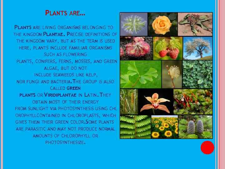 PLANTS ARE… PLANTS ARE LIVING ORGANISMS BELONGING TO THE KINGDOM PLANTAE. PRECISE DEFINITIONS OF