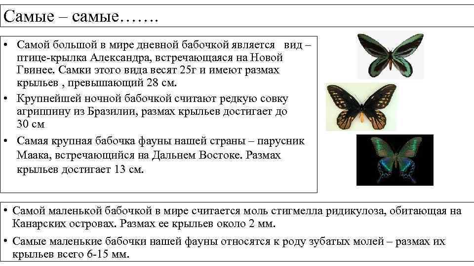 Самые – самые……. • Самой большой в мире дневной бабочкой является вид – птице-крылка