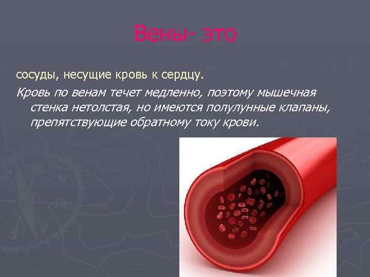Вены- это сосуды, несущие кровь к сердцу. Кровь по венам течет медленно, поэтому мышечная