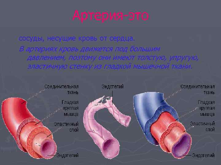 Артерия-это сосуды, несущие кровь от сердца. В артериях кровь движется под большим давлением, поэтому
