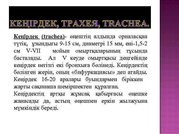 КЕҢІРДЕК, ТРАХЕЯ, TRACHEA. Кеңірдек (trachea)- өңештің алдында орналасқан түтік, ұзындығы 9 -15 см, диаметрі