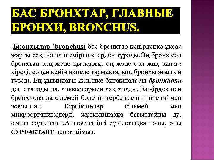 БАС БРОНХТАР, ГЛАВНЫЕ БРОНХИ, BRONCHUS. Бронхылар (bronchus) бас бронхтар кеңірдекке ұқсас жарты сақинаша шеміршектерден