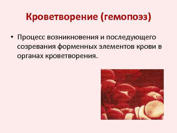 Кроветворение (гемопоэз) • Процесс возникновения и последующего созревания форменных элементов крови в органах кроветворения.