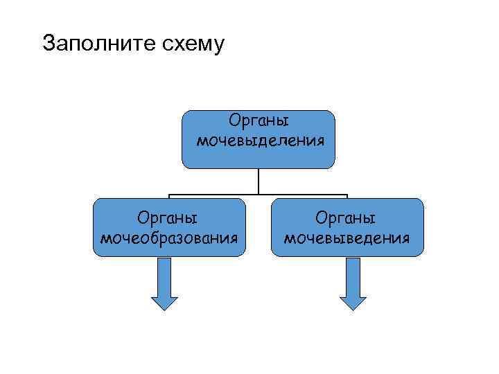 Заполните схему Органы мочевыделения Органы мочеобразования Органы мочевыведения