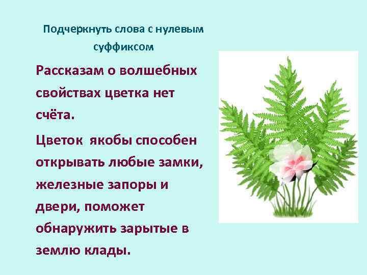 Подчеркнуть слова с нулевым суффиксом Рассказам о волшебных свойствах цветка нет счёта. Цветок якобы