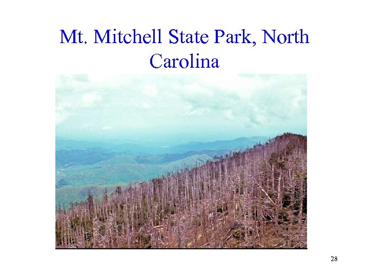 Mt. Mitchell State Park, North Carolina 28