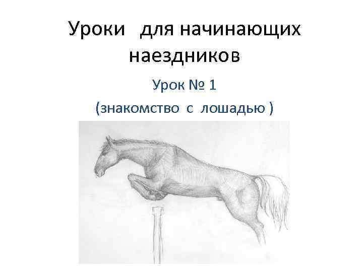 Уроки для начинающих наездников Урок № 1 (знакомство с лошадью )