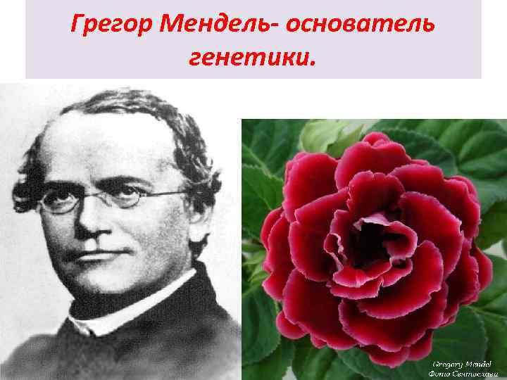 Грегор Мендель- основатель генетики.