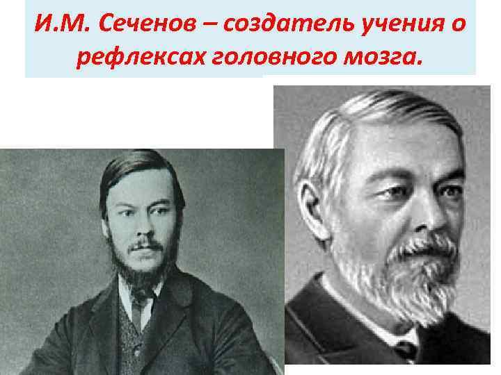 И. М. Сеченов – создатель учения о рефлексах головного мозга.