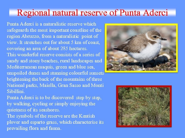 Regional natural reserve of Punta Aderci is a naturalistic reserve which safeguards the most