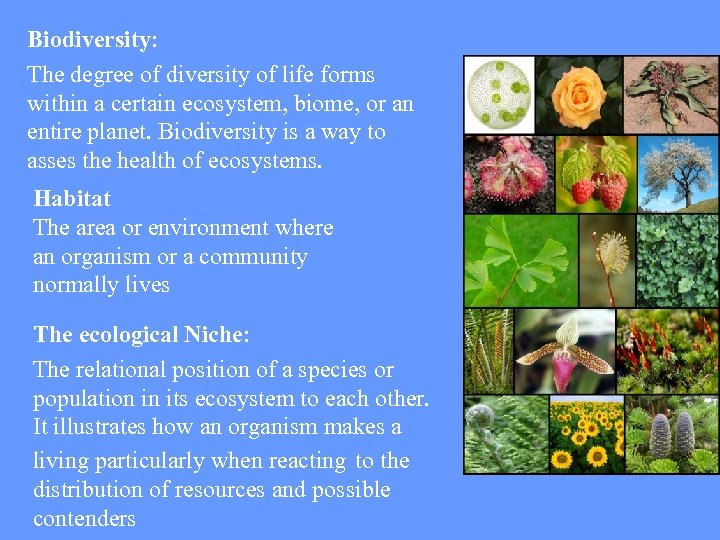 Biodiversity: The degree of diversity of life forms within a certain ecosystem, biome, or