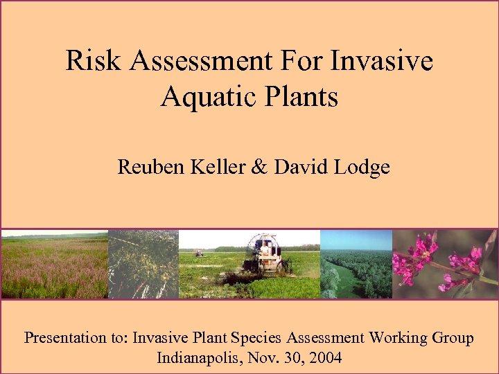 Risk Assessment For Invasive Aquatic Plants Reuben Keller & David Lodge Presentation to: Invasive