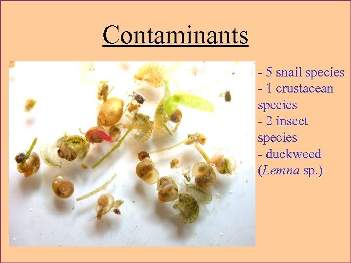 Contaminants - 5 snail species - 1 crustacean species - 2 insect species -