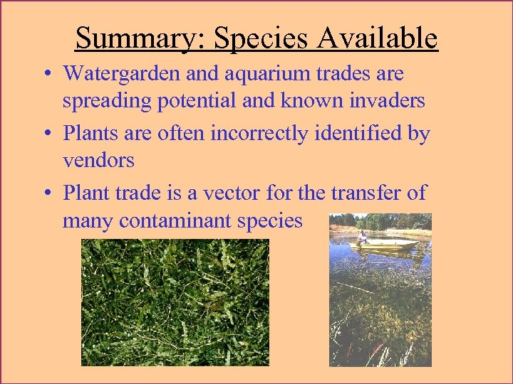 Summary: Species Available • Watergarden and aquarium trades are spreading potential and known invaders