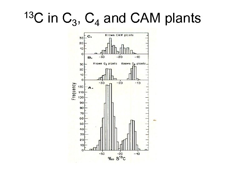 13 C in C 3, C 4 and CAM plants