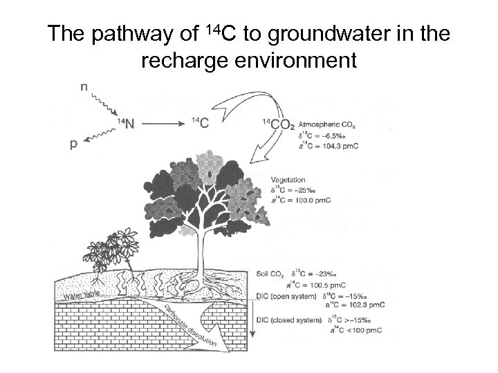 The pathway of 14 C to groundwater in the recharge environment