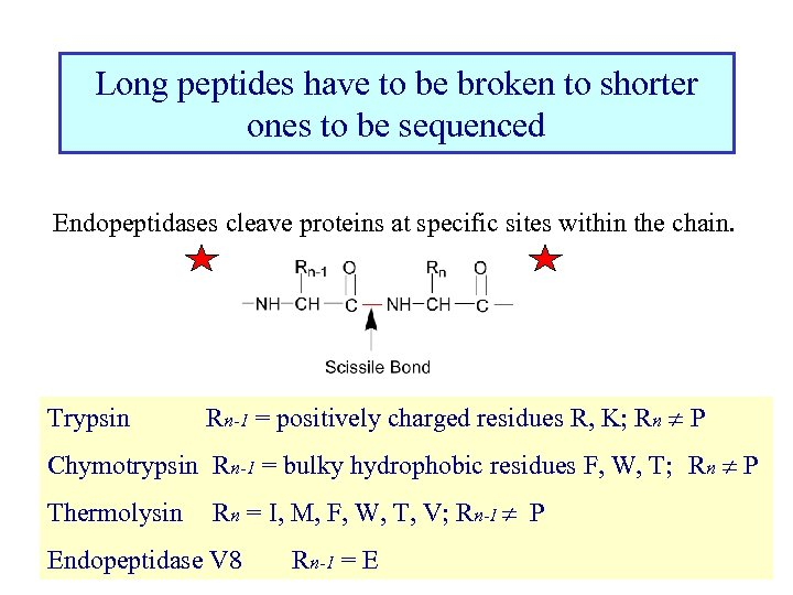 Long peptides have to be broken to shorter ones to be sequenced Endopeptidases cleave