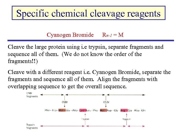 Specific chemical cleavage reagents Cyanogen Bromide Rn-1 = M Cleave the large protein using