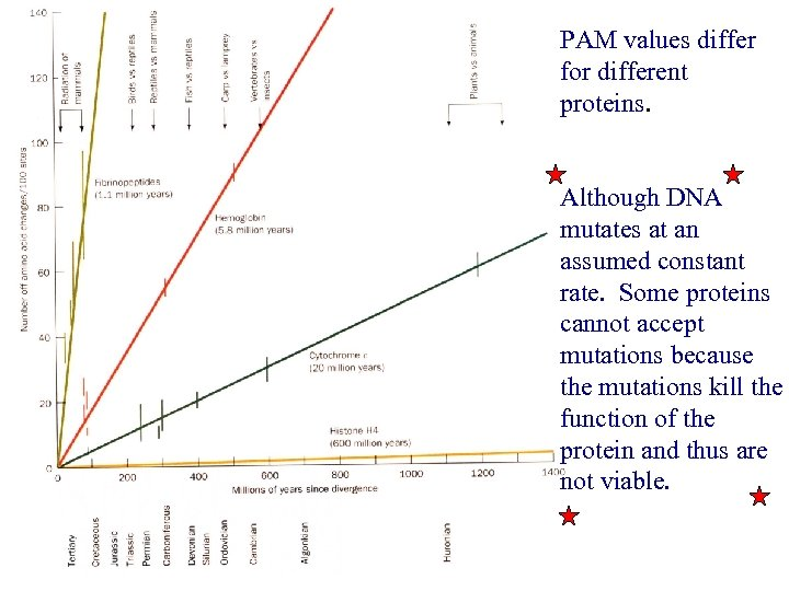 PAM values differ for different proteins. Although DNA mutates at an assumed constant rate.