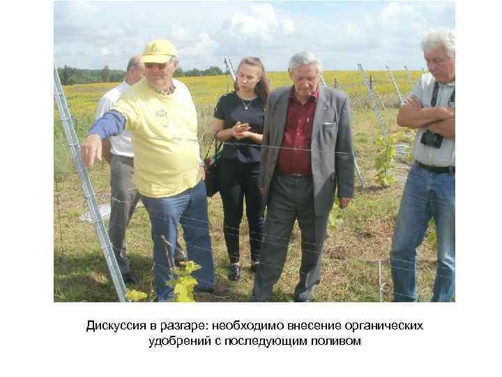 Дискуссия в разгаре: необходимо внесение органических удобрений с последующим поливом