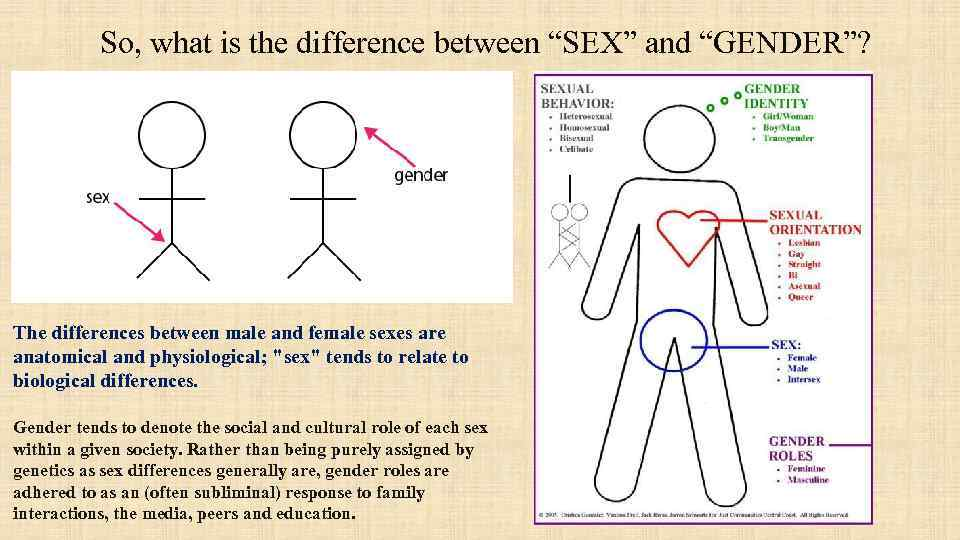 Physiology Of Female And Male Sexuality