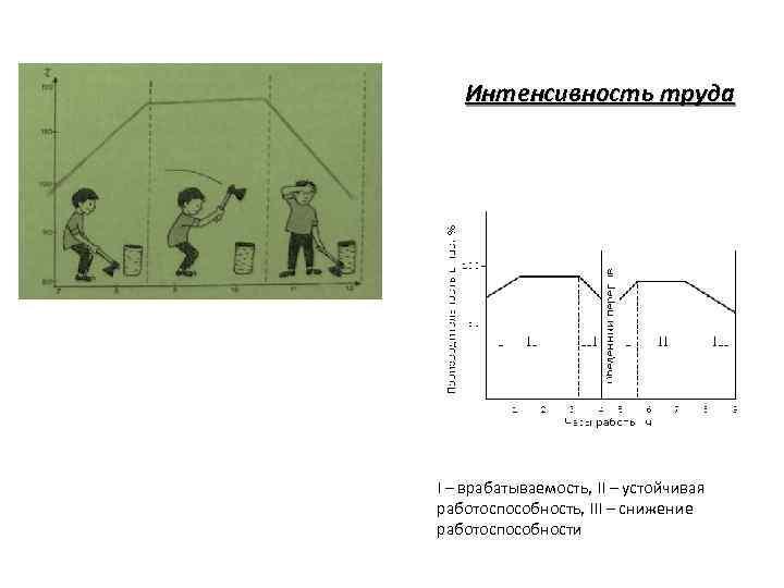 Интенсивность труда I – врабатываемость, II – устойчивая работоспособность, III – снижение работоспособности