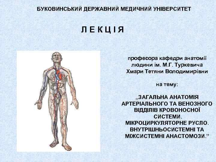 БУКОВИНСЬКИЙ ДЕРЖАВНИЙ МЕДИЧНИЙ УНІВЕРСИТЕТ Л Е К Ц І Я професора кафедри анатомії людини