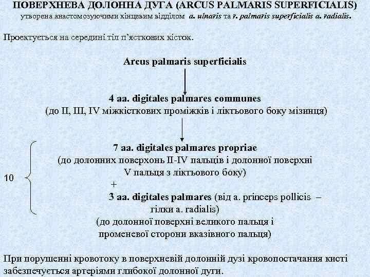 ПОВЕРХНЕВА ДОЛОННА ДУГА (ARCUS PALMARIS SUPERFICIALIS) утворена анастомозуючими кінцевим відділом a. ulnaris та r.