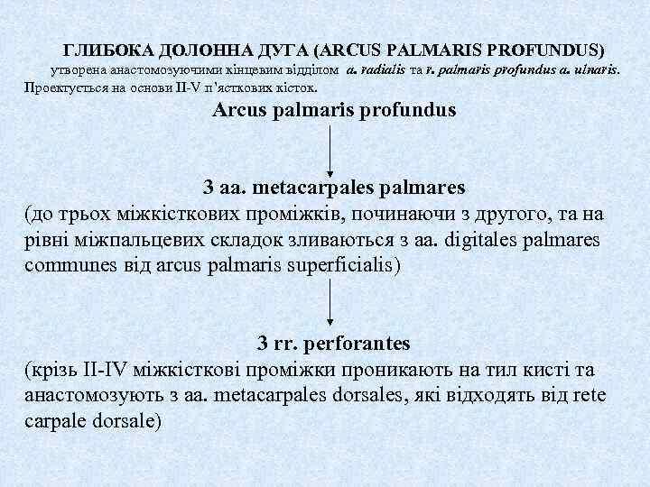 ГЛИБОКА ДОЛОННА ДУГА (ARCUS PALMARIS PROFUNDUS) утворена анастомозуючими кінцевим відділом a. radialis та r.
