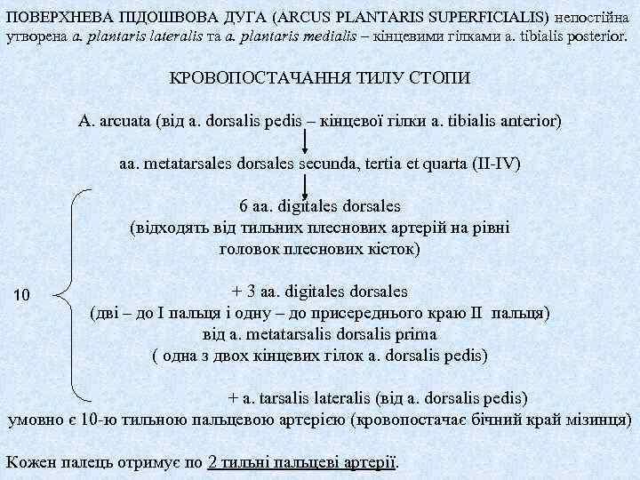 ПОВЕРХНЕВА ПІДОШВОВА ДУГА (ARCUS PLANTARIS SUPERFICIALIS) непостійна утворена a. plantaris lateralis та a. plantaris