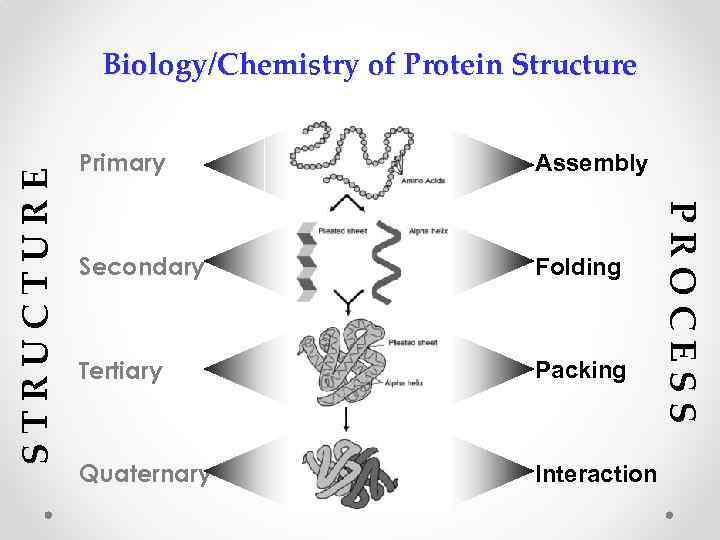 a description of an enzyme as a tertiary globular protein What are the differences between fibrous and globular proteins what are the differences between fibrous and globular  the word protein is derived from the greek.