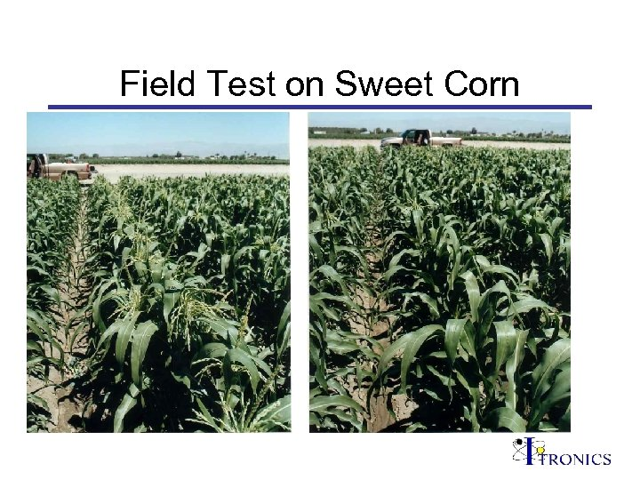Field Test on Sweet Corn