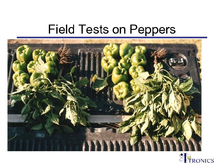 Field Tests on Peppers