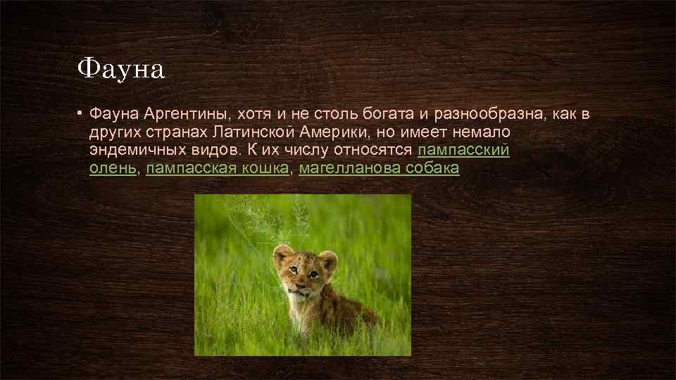 Фауна • Фауна Аргентины, хотя и не столь богата и разнообразна, как в других