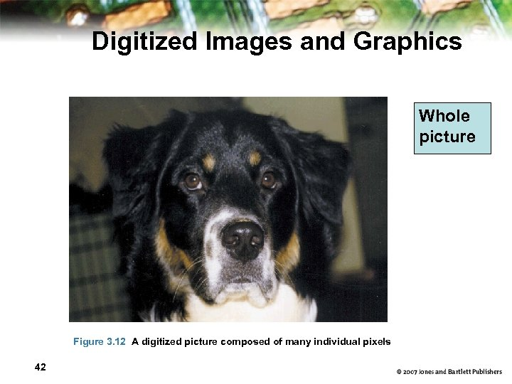 Digitized Images and Graphics Whole picture Figure 3. 12 A digitized picture composed of