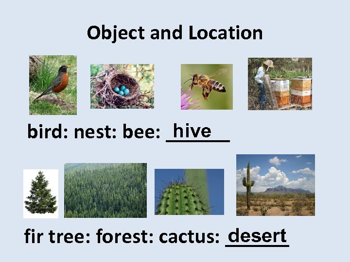 Object and Location hive bird: nest: bee: ______ desert fir tree: forest: cactus: ______