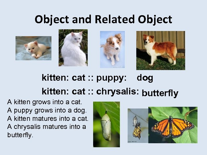 Object and Related Object kitten: cat : : puppy: dog kitten: cat : :