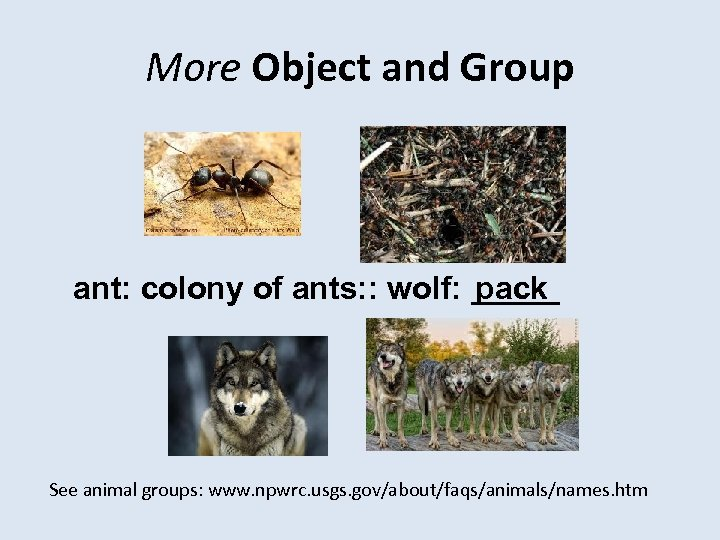 More Object and Group ant: colony of ants: : wolf: _____ pack See animal