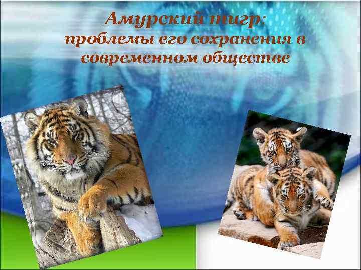 Амурский тигр: проблемы его сохранения в современном обществе