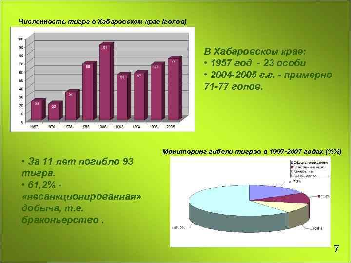 Численность тигра в Хабаровском крае (голов) В Хабаровском крае: • 1957 год - 23