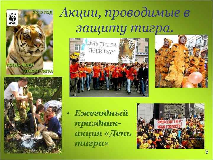 Акции, проводимые в защиту тигра. • Ежегодный праздникакция «День тигра» 9